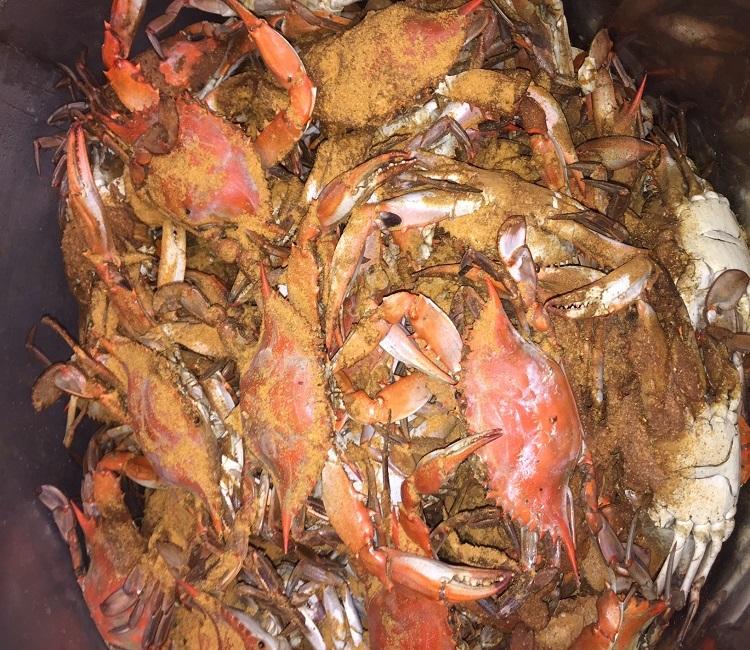 maryland hardshell blue crabs maryland blue crabs 1 dozen